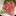 Local Albacore ~ Sashimi Specials ~ local in-season white tuna from the west coast