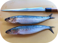 Check out how big these sardines are!