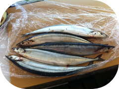 A pile of Sanma for dinner tonight.