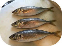 Some beautiful wild caught Tsuri Aji just in.